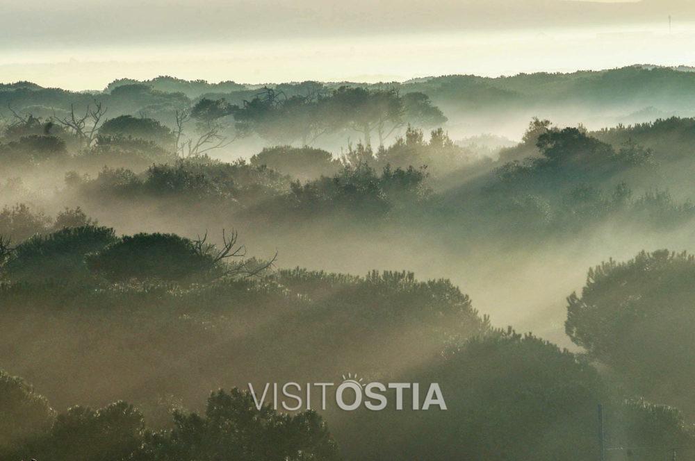 VisitOstia - pineta di Castelfusano