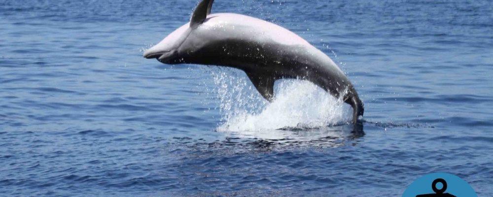 Avvistamento dei Delfini