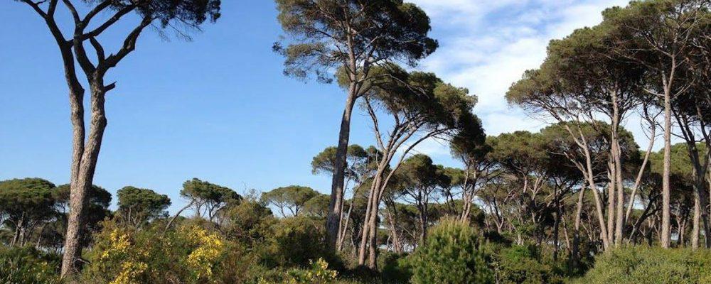 Castel Fusano pine forest
